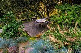 A tree in a garden