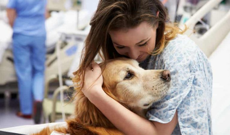 Pets: The Best Family Companion